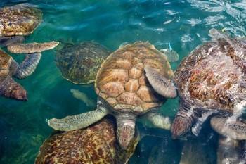 Turtle Centre