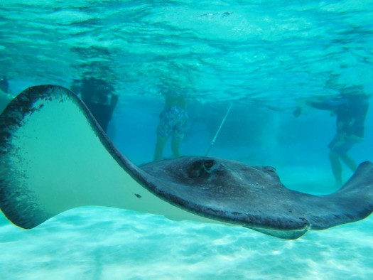 Stingray, Coral Reef Snorkel & Seven Mile Beach