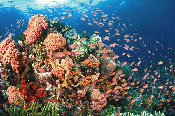 Stingray City & Barrier Reef Snorkel